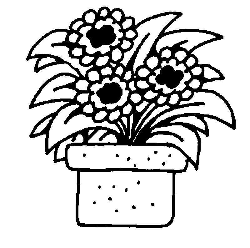 Раскраски комнатные растения для детей - 5